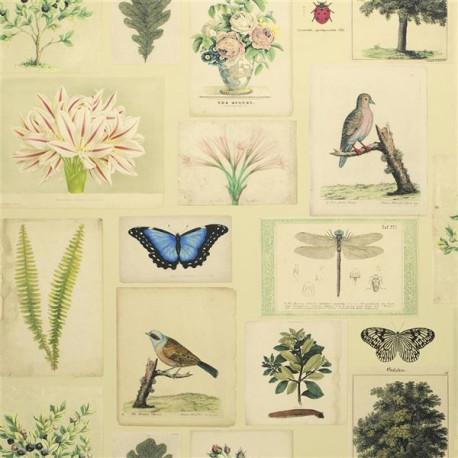 Flora and fauna de John Derian